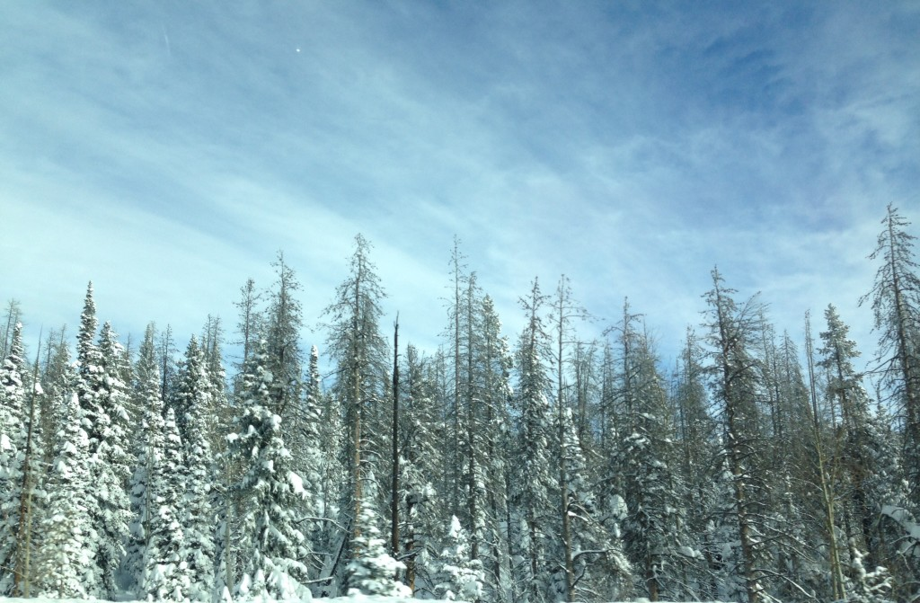 Rabbit Ears Pass Snow