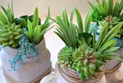 Mason Jar DIY Succulents